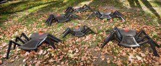 Redback Spiders - Venomous Landfill