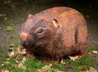 Wilma the Wombat