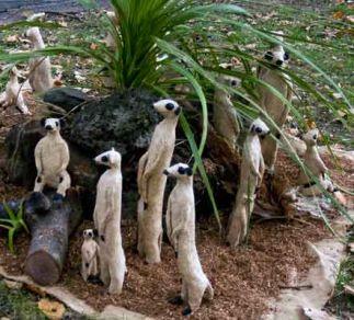 Meerkats #1