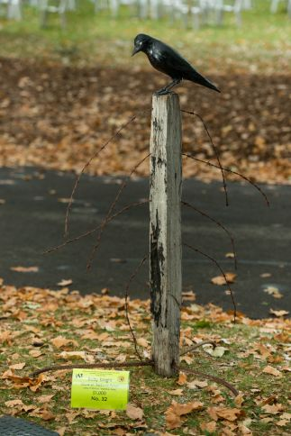 Crow on Barb-wire Fence